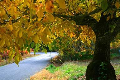 Sonoma, Marin, Napa County CA